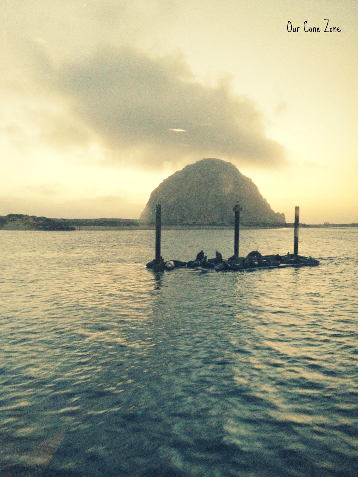 Seals, Morro Rock