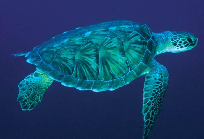 sea-turtle-2