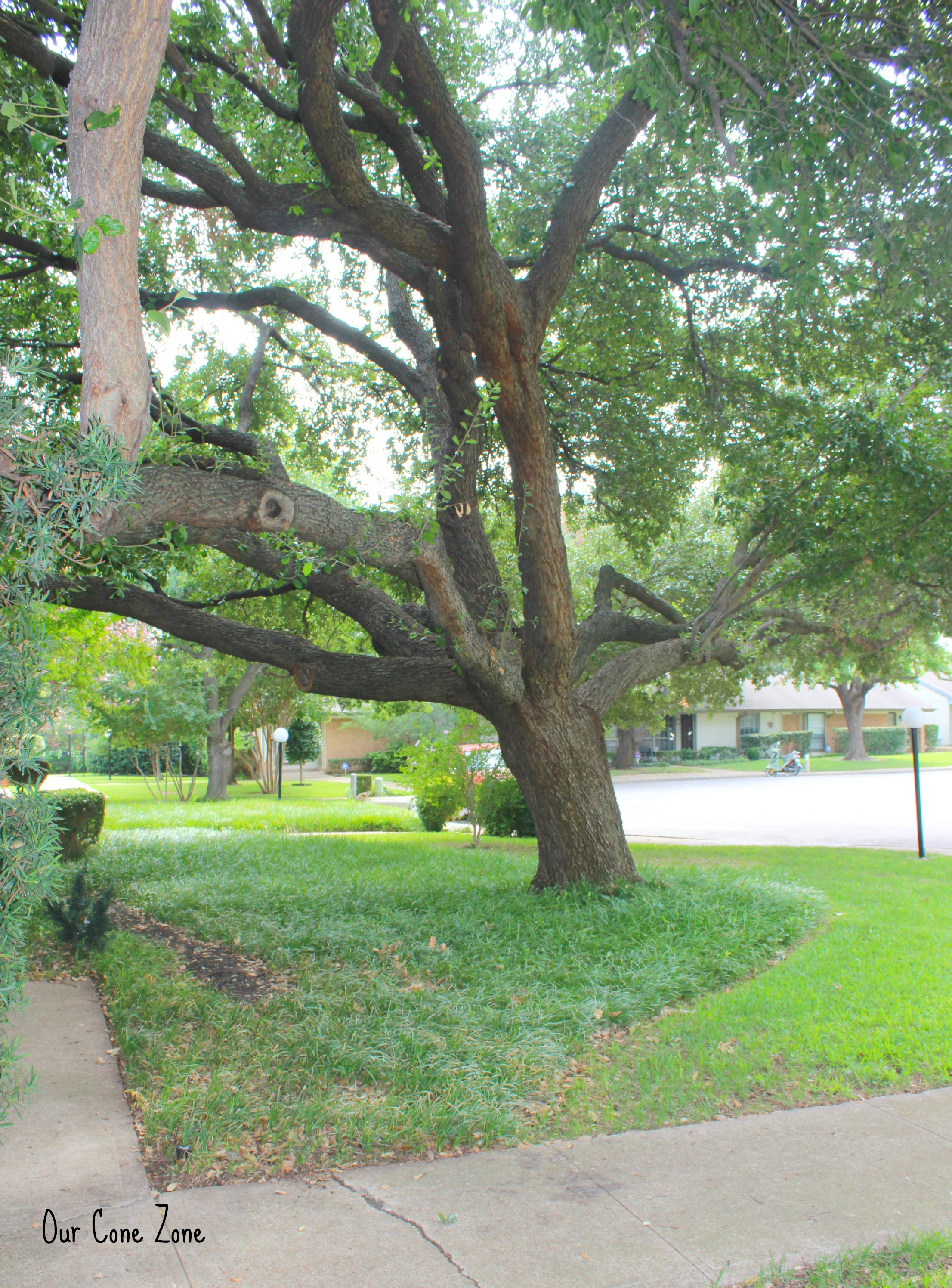 Texas townhouse front yard tree signature