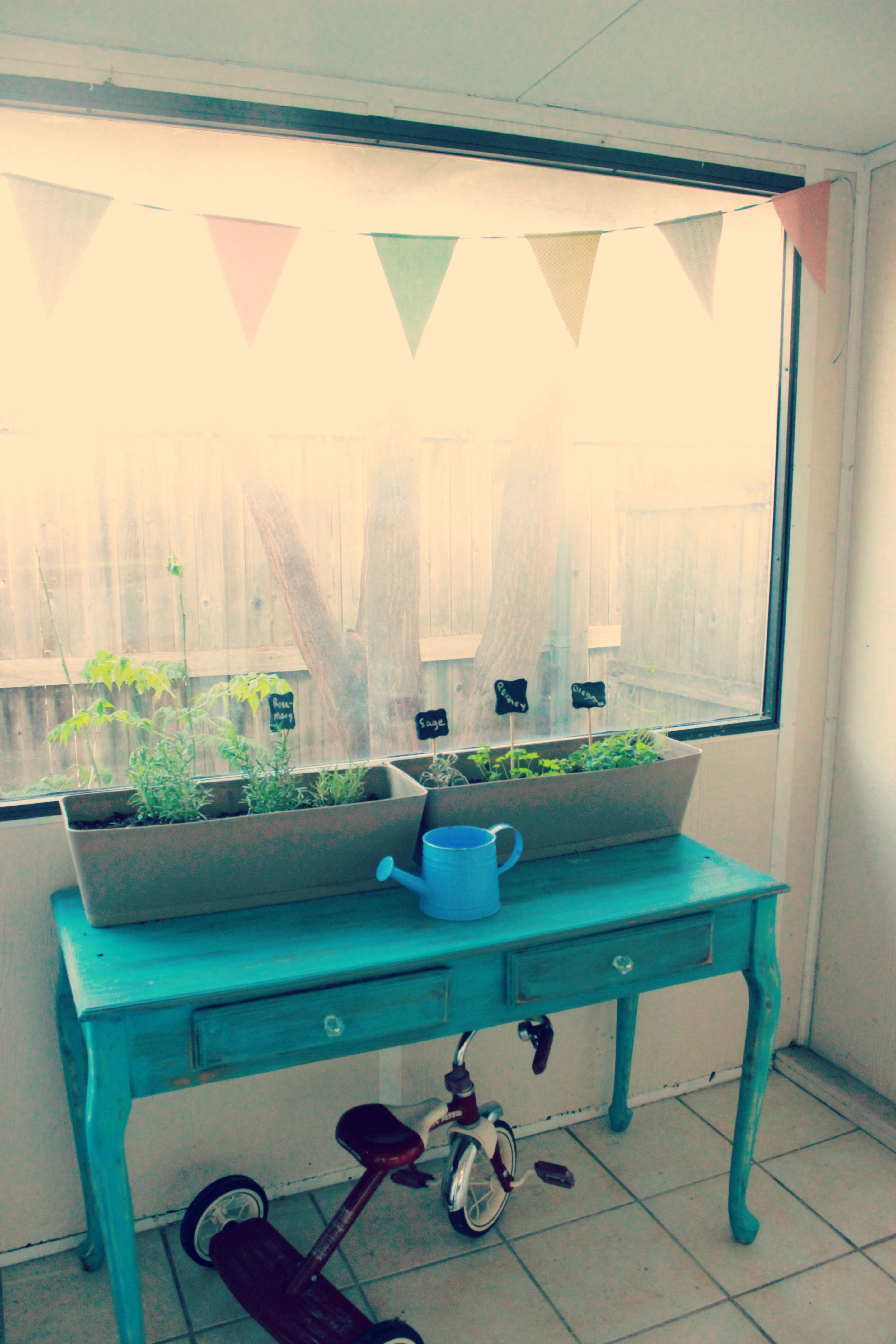 Plants in the sunroom