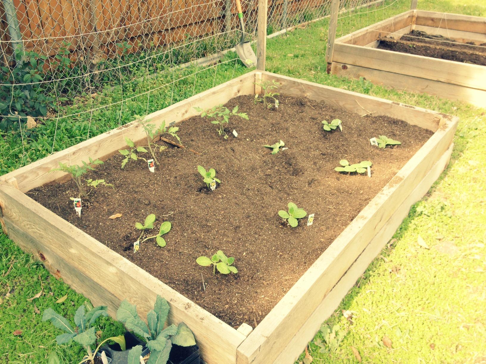 TX Garden 2
