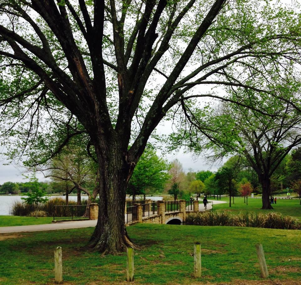 Spring in Dallas lake